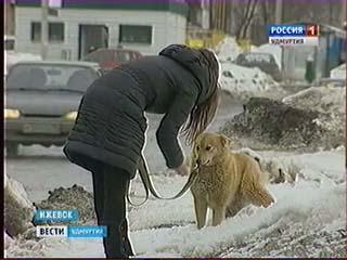 Азербайджан новости азадлыг видео